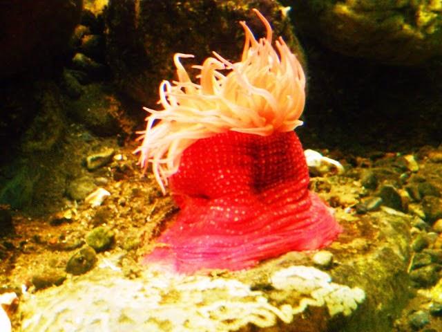 Hoe komt Aqua aan de bandnaam - Danmarks Akvarium