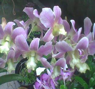 Bunga Kesayangan
