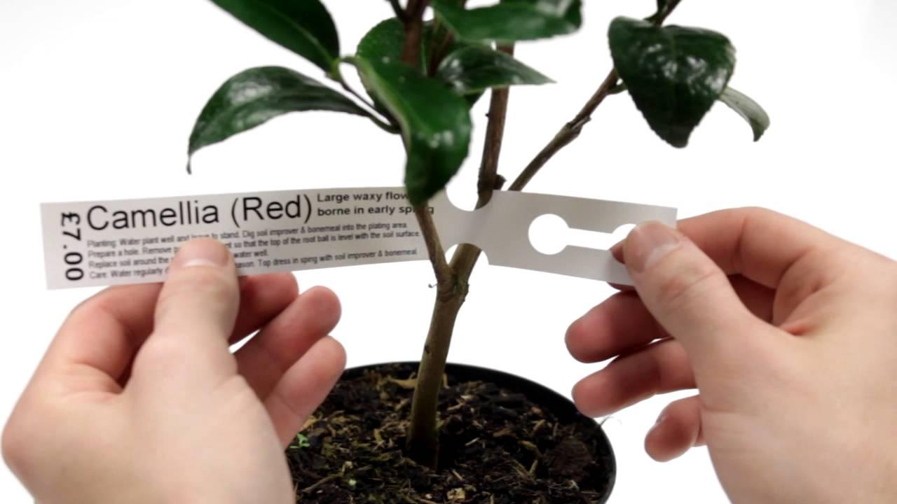 Que tipos de etiquetas adhesivas de transferencia t rmica - Etiquetas para plantas ...