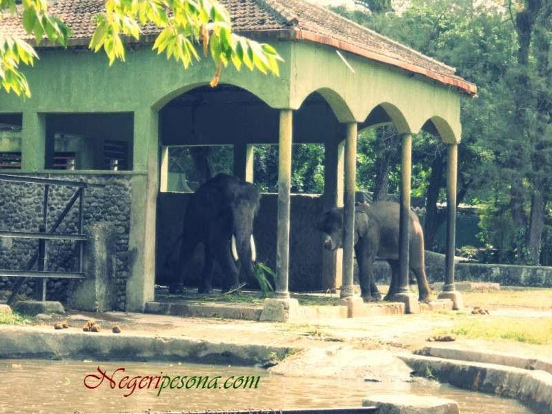 Tempat Wisata di Wilayah DI. Yogyakarta