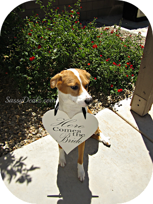 dog with here comes the bride heart sign