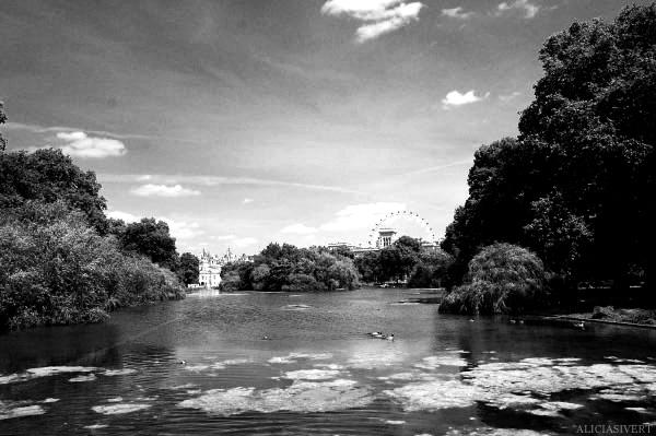 aliciasivert, Alicia Sivertsson, London, svartvitt, black and white, st james' park