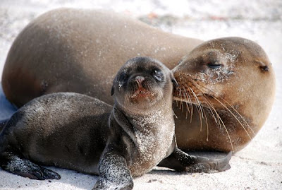 Sea lion kiss love animal pictures