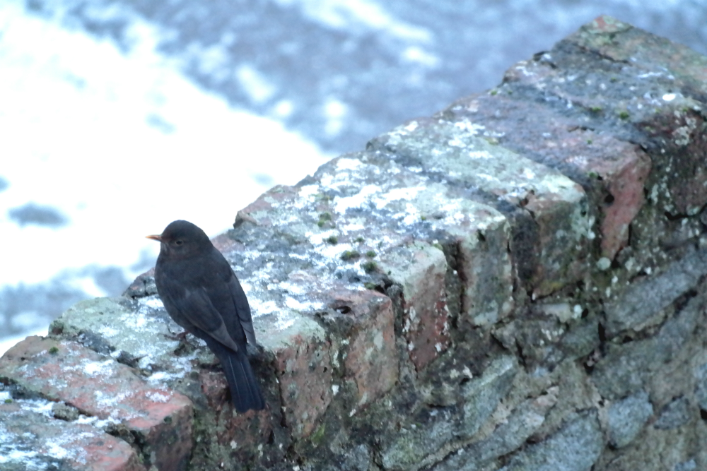 Bird on snowy wall