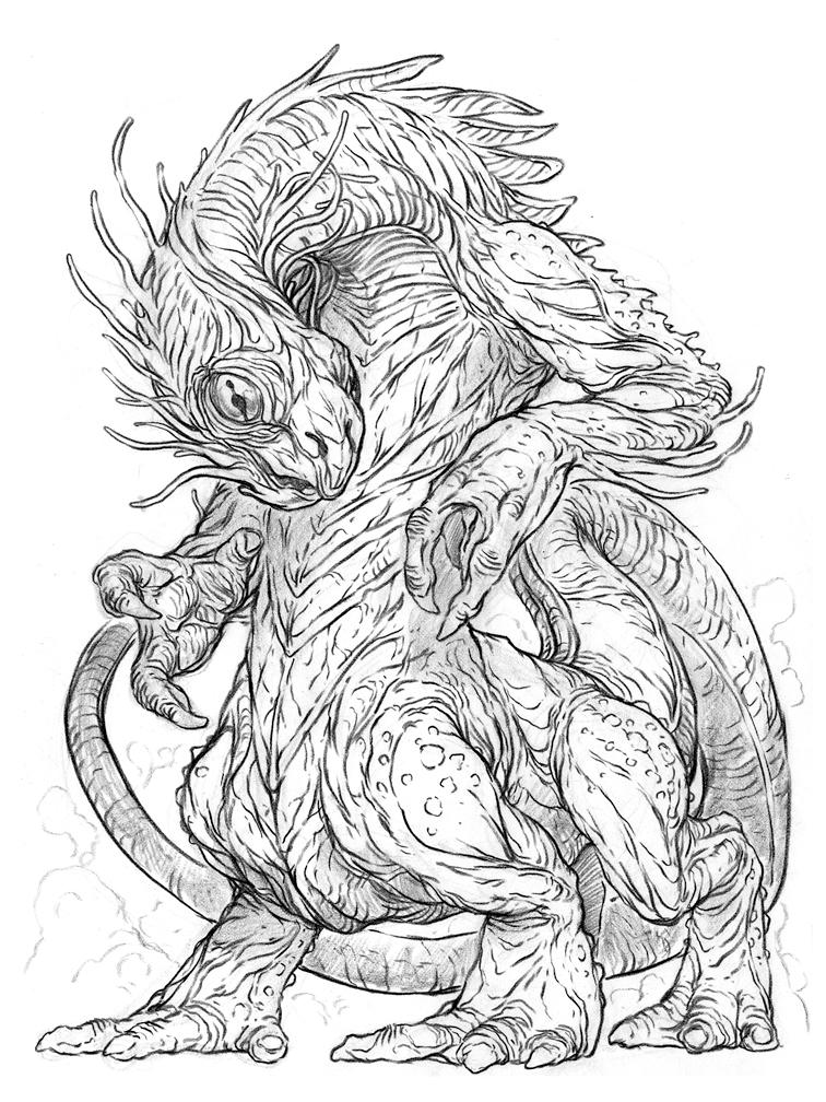 Salamander drawing