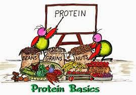 Ini Dia Contoh Makalah Protein