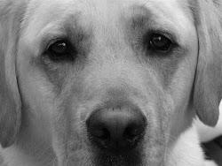 A Dog- Frisco