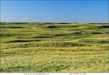 Restore the Prairies