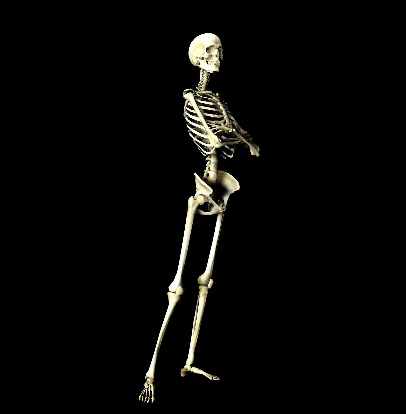 http://2.bp.blogspot.com/-Y9hmPElPYzw/UQ-kz-4rICI/AAAAAAAABPc/ZyYvCae3jN4/s1600/skeleton.jpg