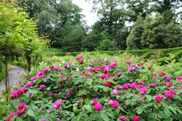 Brodsworth Hall rose garden Engish Heritage Doncaster South Yorkshire