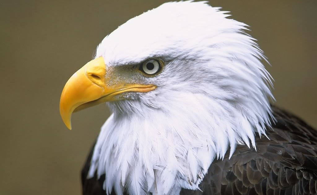 Endangered Birds Zoo Animals