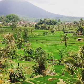 Bali Tour Driver guide