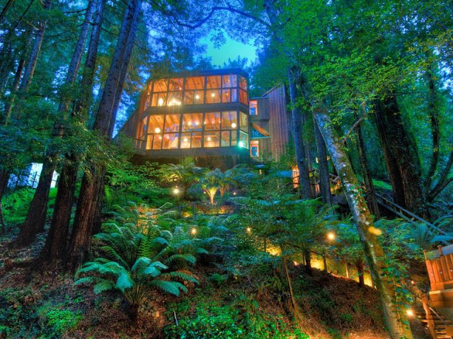 Photo of tree house in the forest among the trees