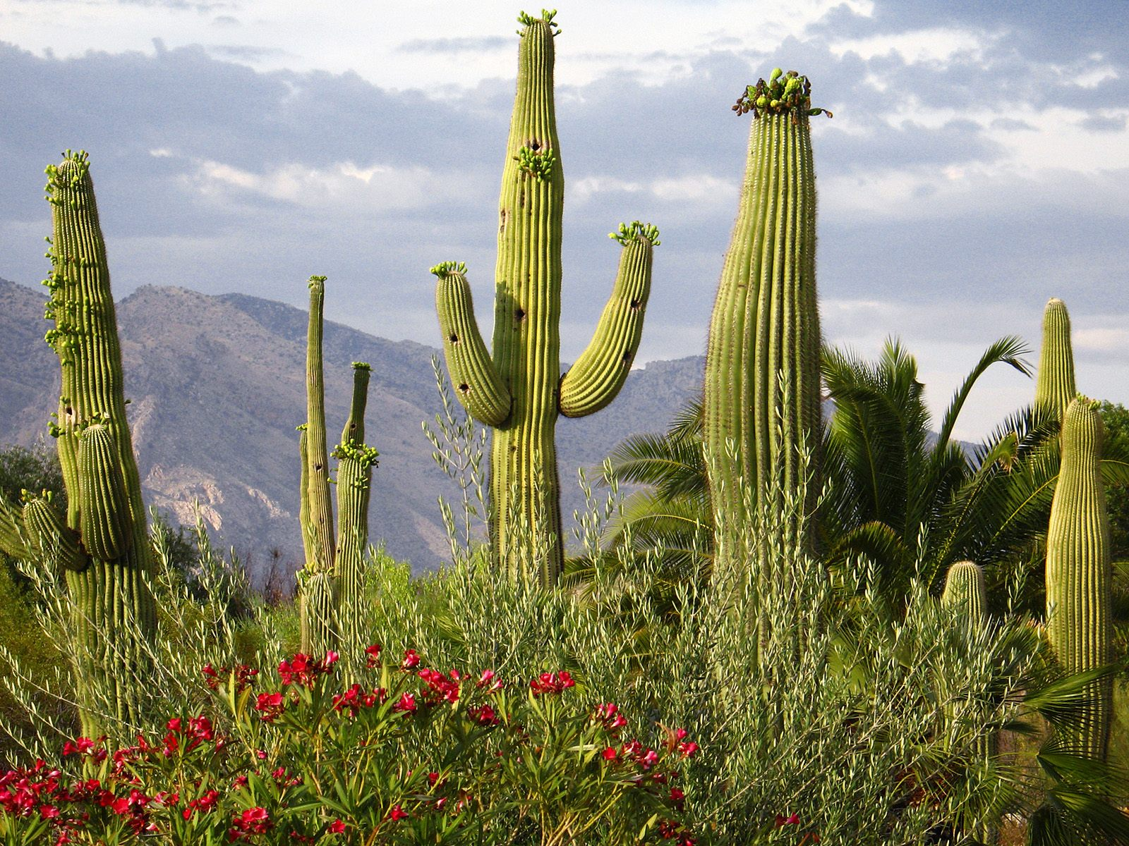 hd cactus wallpapers - photo #20