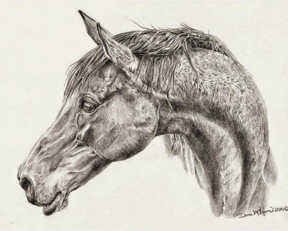 cuadros-dibujos-a-lapiz-de-caballos
