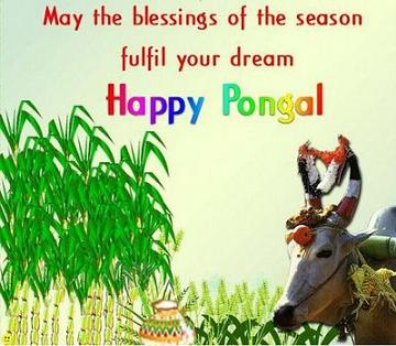 Wallpaper mouth pongal greetings 2012 downnload greetings for pongal festival greetings for free ecards for pongal pongal wishes greetings free greetings for pongal happy pongal greetings mattu pongal 2012 m4hsunfo