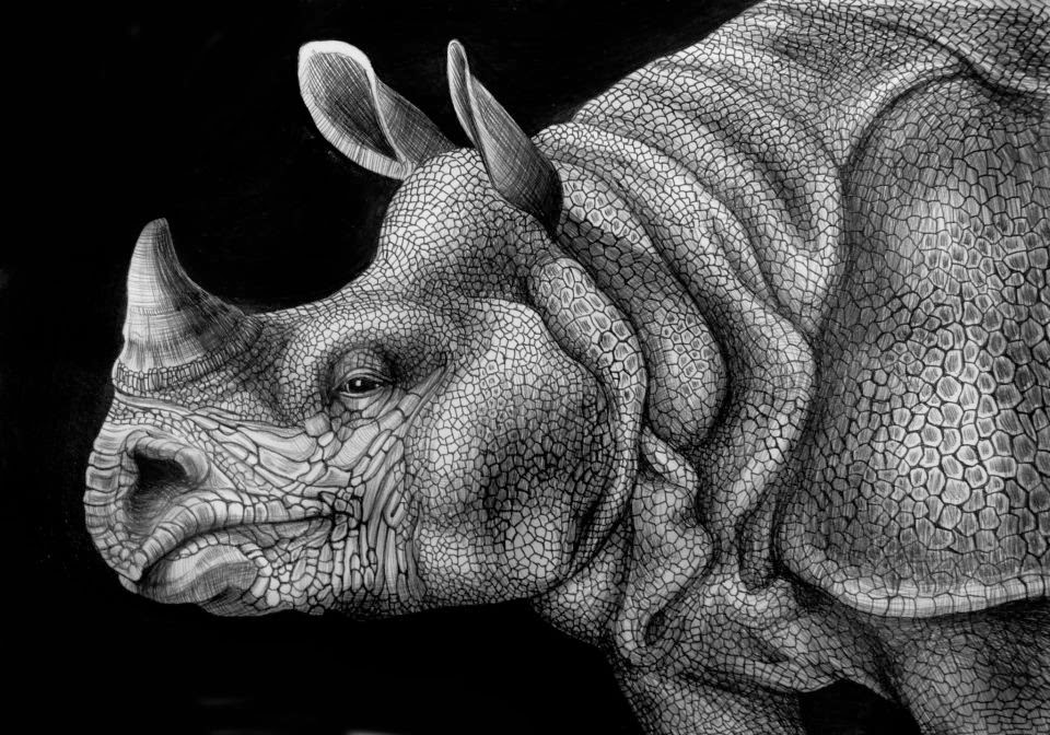 16-White-Rhino-Tim-Jeffs-All-Creatures-Great-and-Small-Ink-Drawings-www-designstack-co