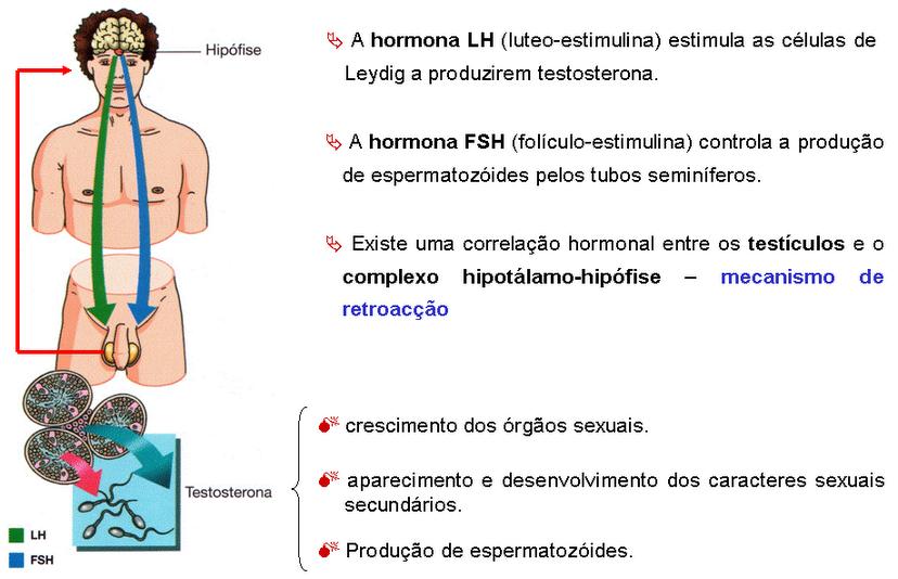 ciclo testosterona acquosa stanozolol
