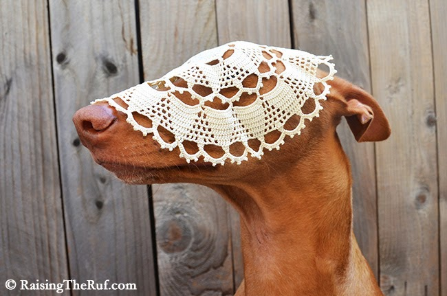 doily lace dog