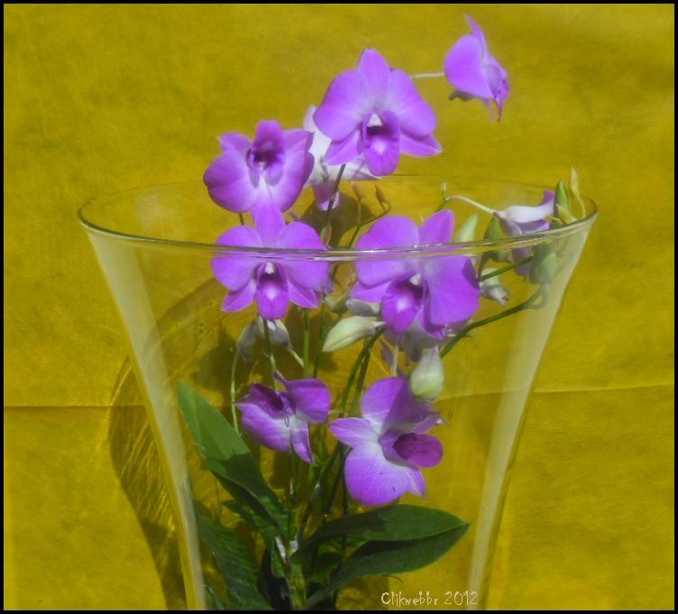 Fotos de orquídeas Florpedia com