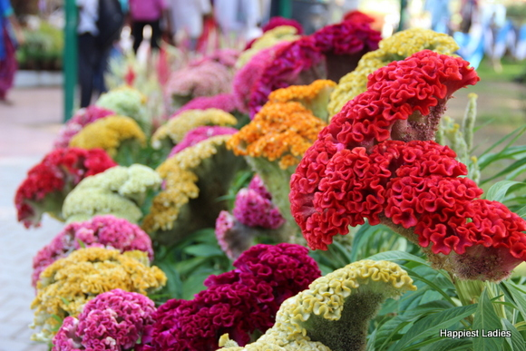 mysore dasara 2015 flower show8