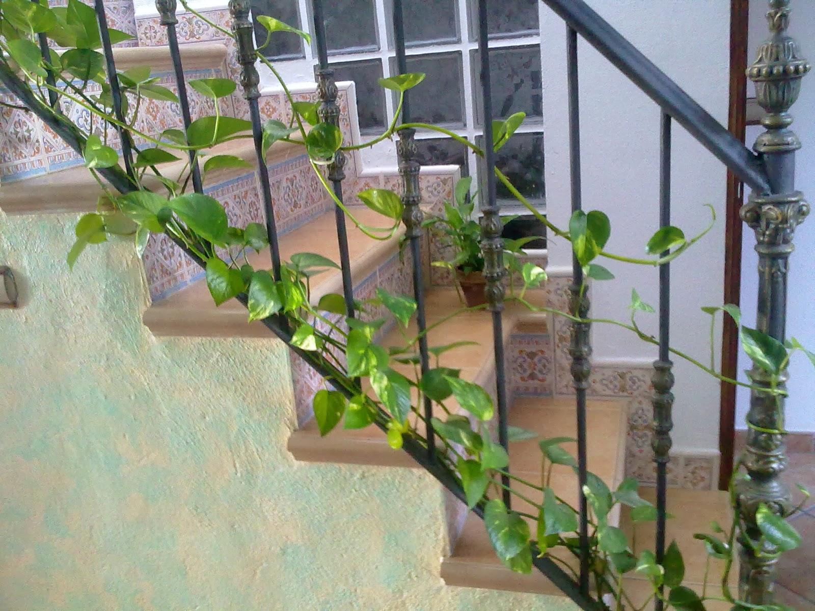 Entre patios y plantas que plantas poner en el interior - Enredaderas de interior ...
