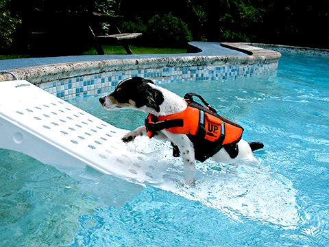 Cachorro na rampa da piscina - ensinando o cachorro a nadar