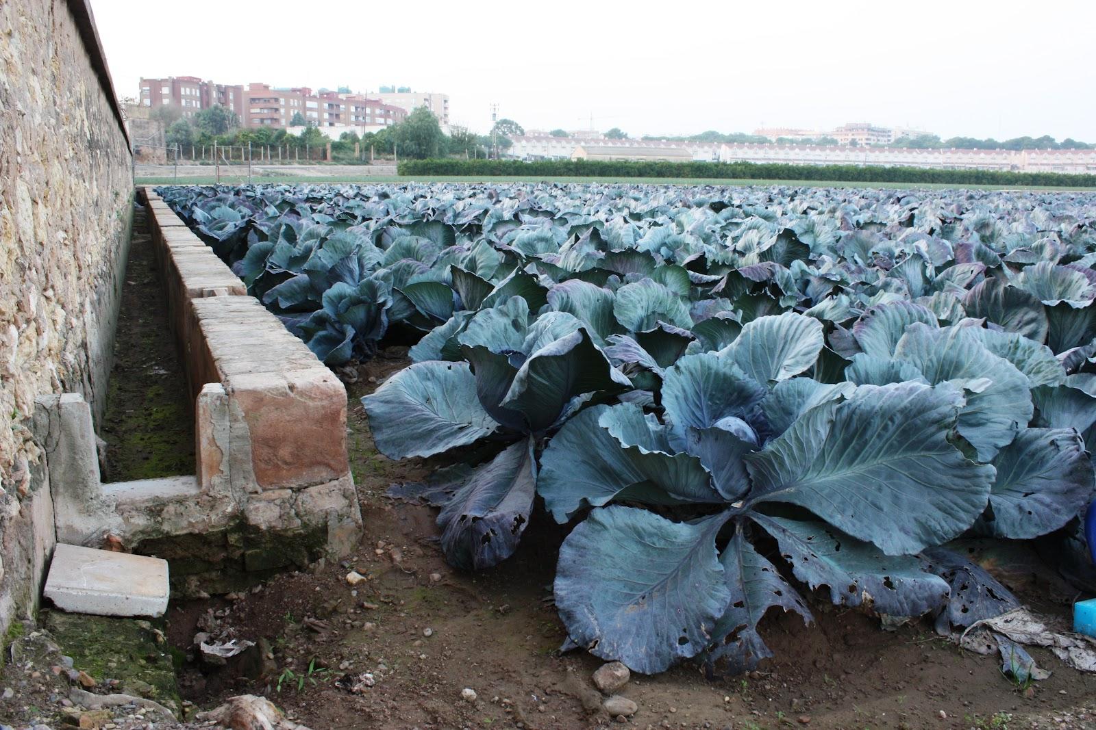 Crea tu jard n leyendas urbanas sobre el cultivo hidrop nico for Crea tu jardin