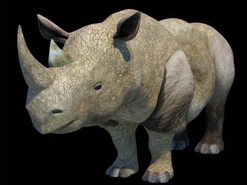 Rhino+exture+diffuse+01.jpg