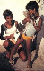 Storia della Colonia Felina di Su Pallosu