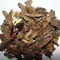 Chá de Bugre ou Porangaba