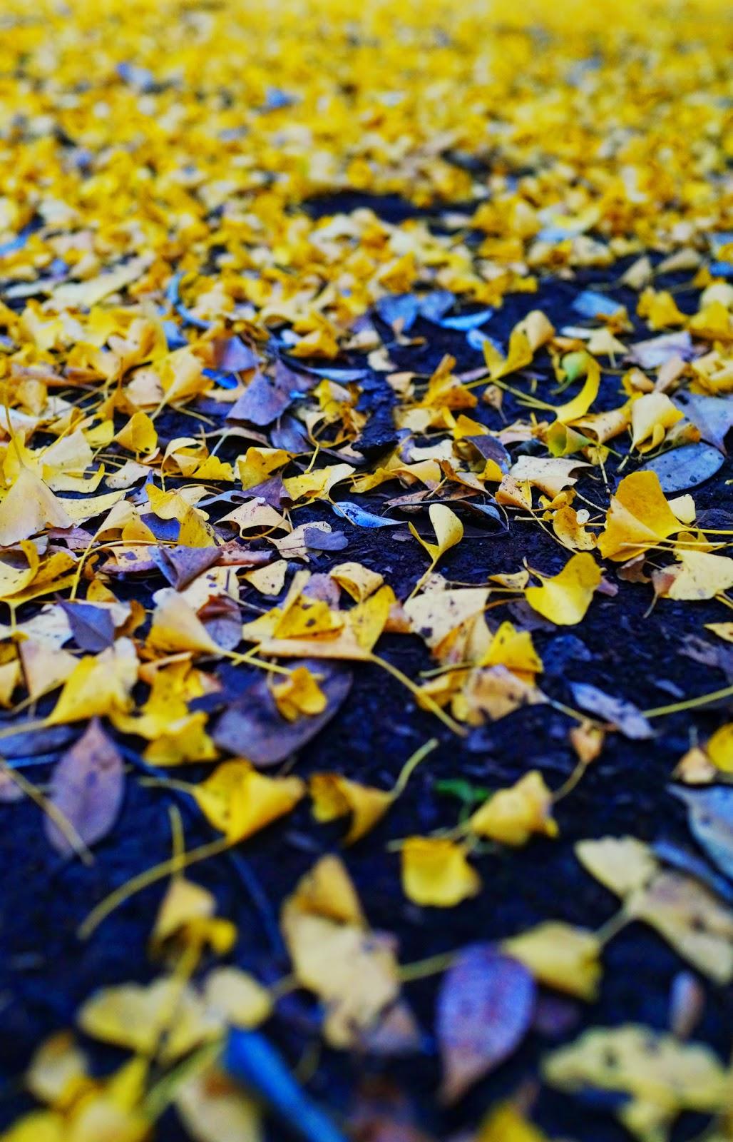 Autumn in Yoyogi Koen leaves tokyo japan