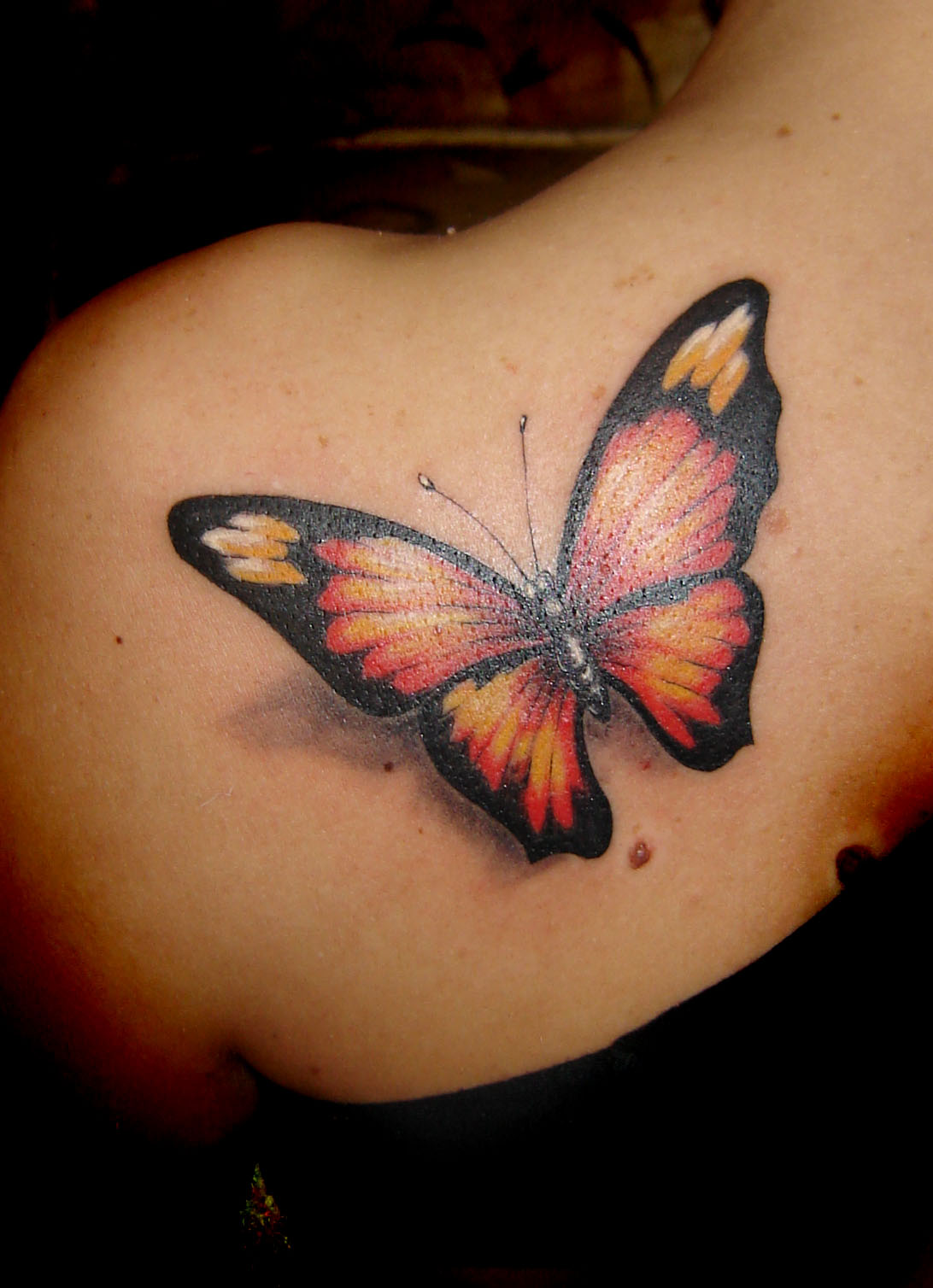 tatto: Butterfly Tatto...