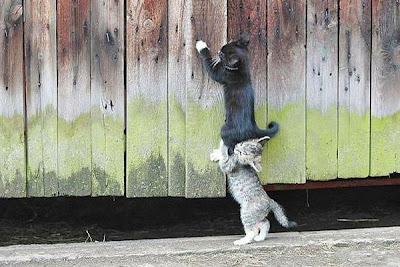 kucing panjat pagar