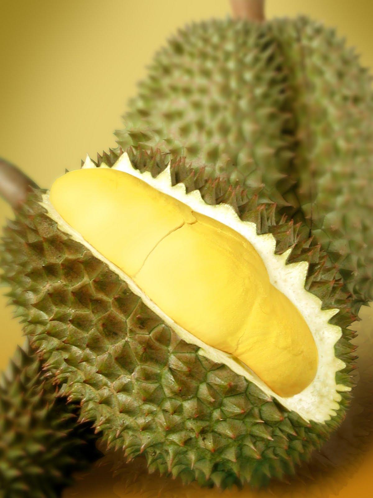 Durian adalah buah favorite yang sangat luar biasa. Buah durian dengan rasa manis dan bau yang sangat wangi. Uenak tenan, durian emang buah yang sangat luar biasanya enak banget. jika ada yang bilang buah durian itu menjijikan itu merupakan hal yang sangat keliru sekali. Durian mempunyai banyak jenis antara lain durian montong, durian merah dll.