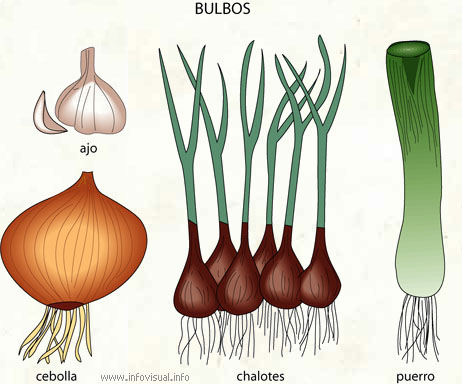 ejemplo parte comestibles planta: