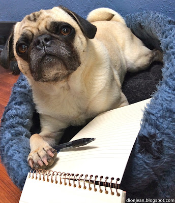 Liam is ready to write down some SEO tips for pet bloggers