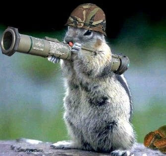 Squirrel on Gun Position