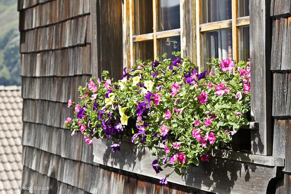 Blumen vor Hütte Südtirol