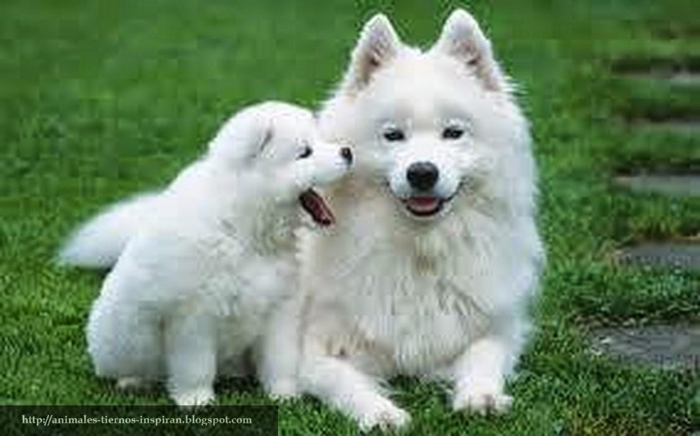 Animales Tiernos Inspiran Tiernas imagenes de cachorros jugando