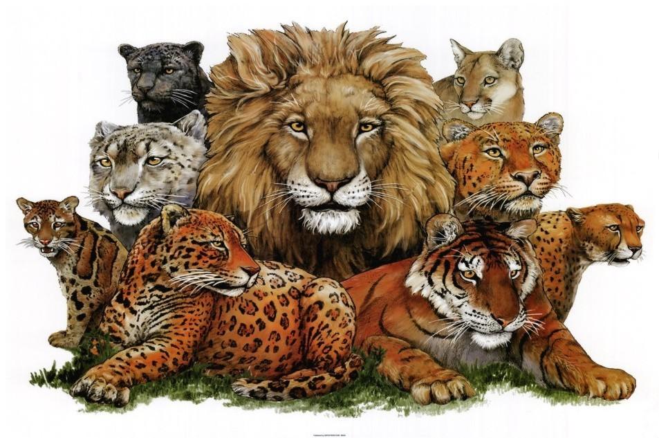 Fotografías de animales salvajes Posters en AllPosters es