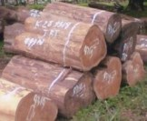 Teak Wood Price
