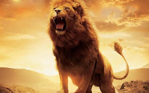 http://2.bp.blogspot.com/-YFYA0RVxw2k/T9Cmx5BxWTI/AAAAAAAABvw/whGXeqsiT8A/s1600/fmf-roar-aslan.jpg