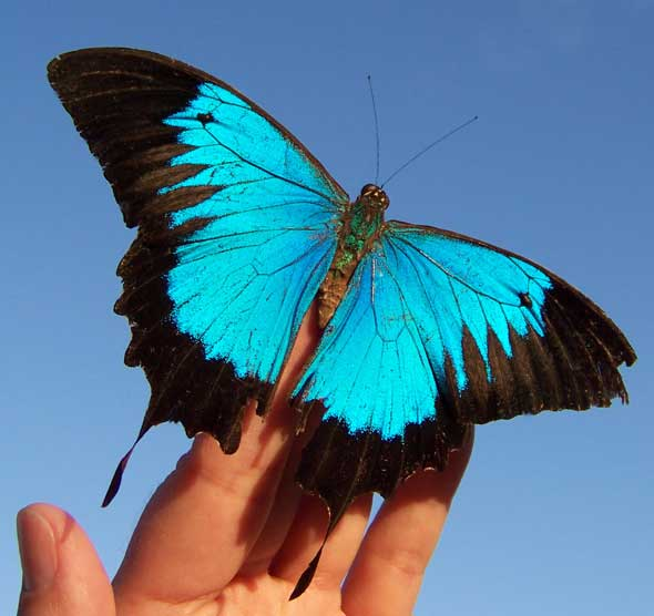 Ulysses Butterfly My Journey with James ...