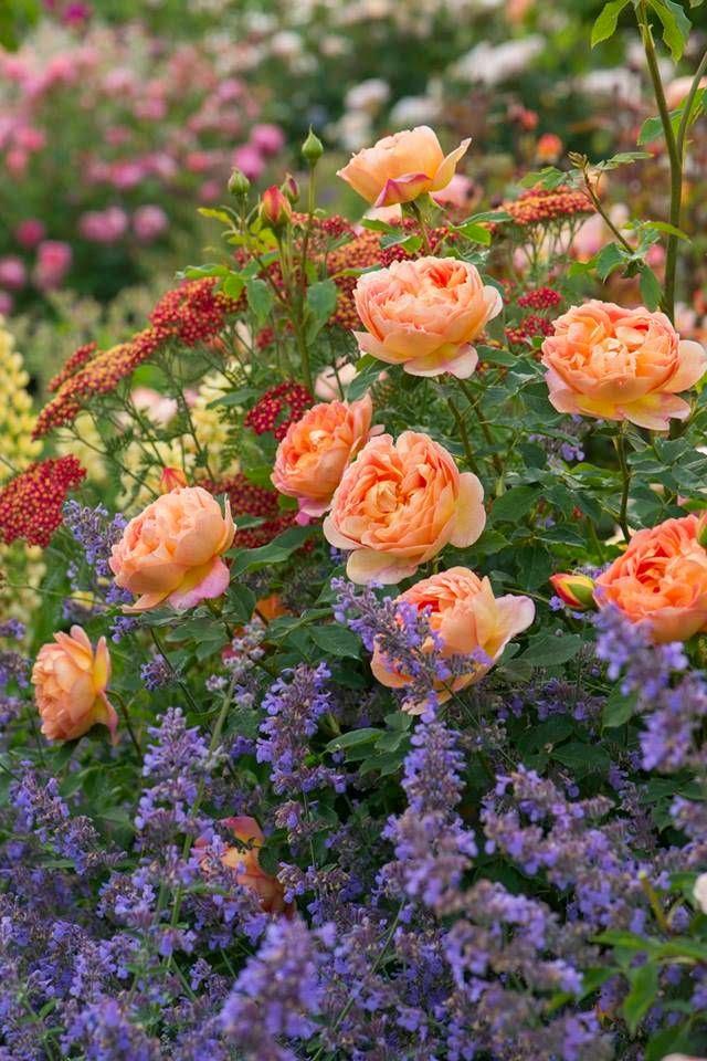 fleurs pour jardin anglais