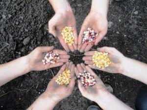 Πανθεσσαλική γιορτή ανταλλαγής σπόρων