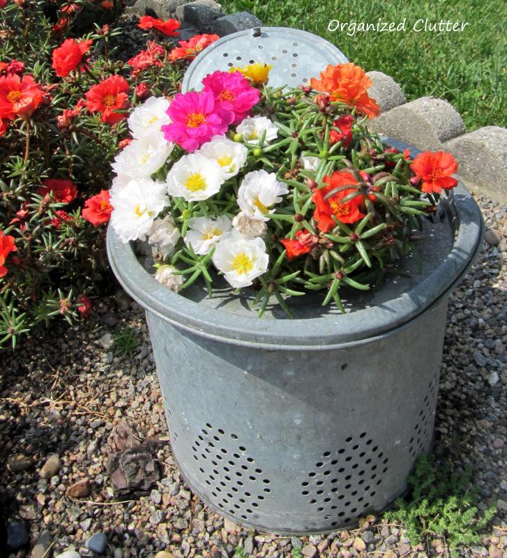 Moss Roses in Minnow Bucket Insert www.organizedclutterqueen.blogspot.com