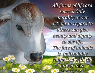 AGN VEG GLOBAL: The DARK TRUTH about DAIRY INDUSTRY
