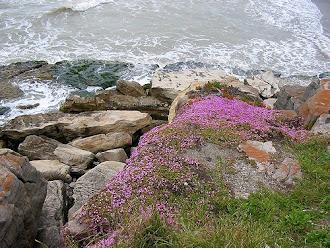 Manto de la virgen sobre las rocas