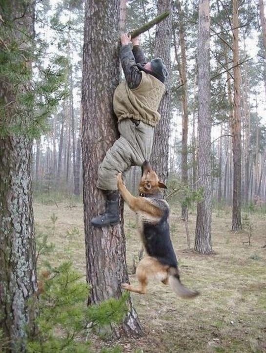 grappige foto: hond aan werk